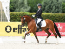 Caramba KE Westfalenwoche 2017, Foto: Pony-Royal