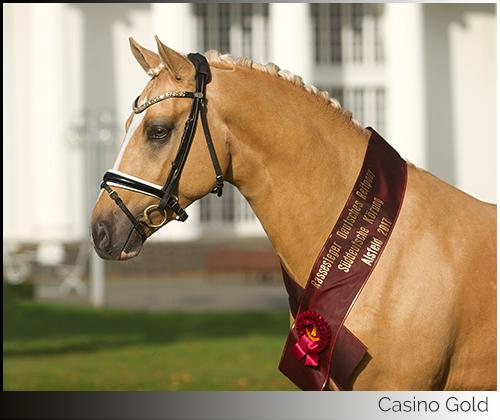 Casino Gold Portrait mit Schärpe